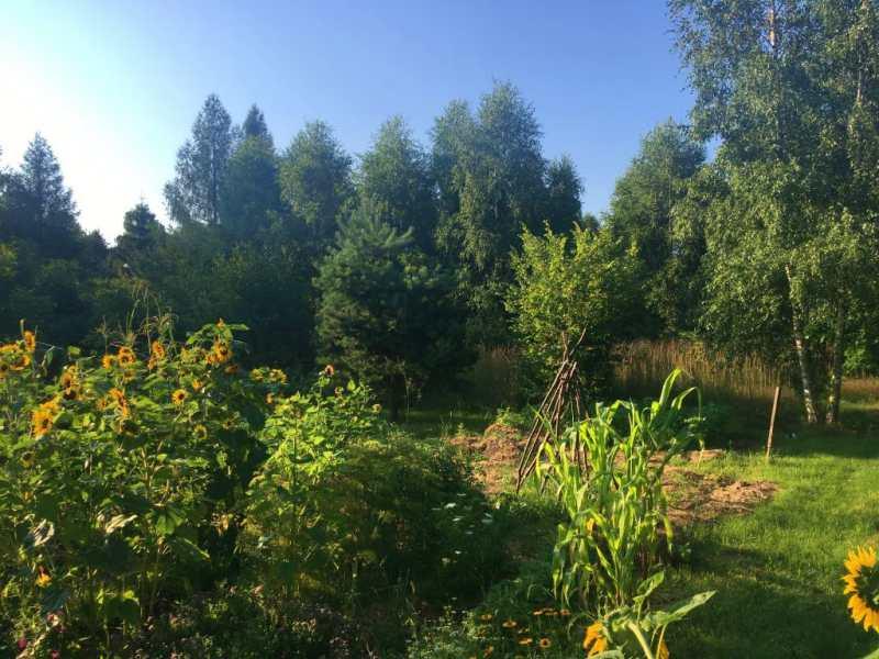 ogród w dąbrówce